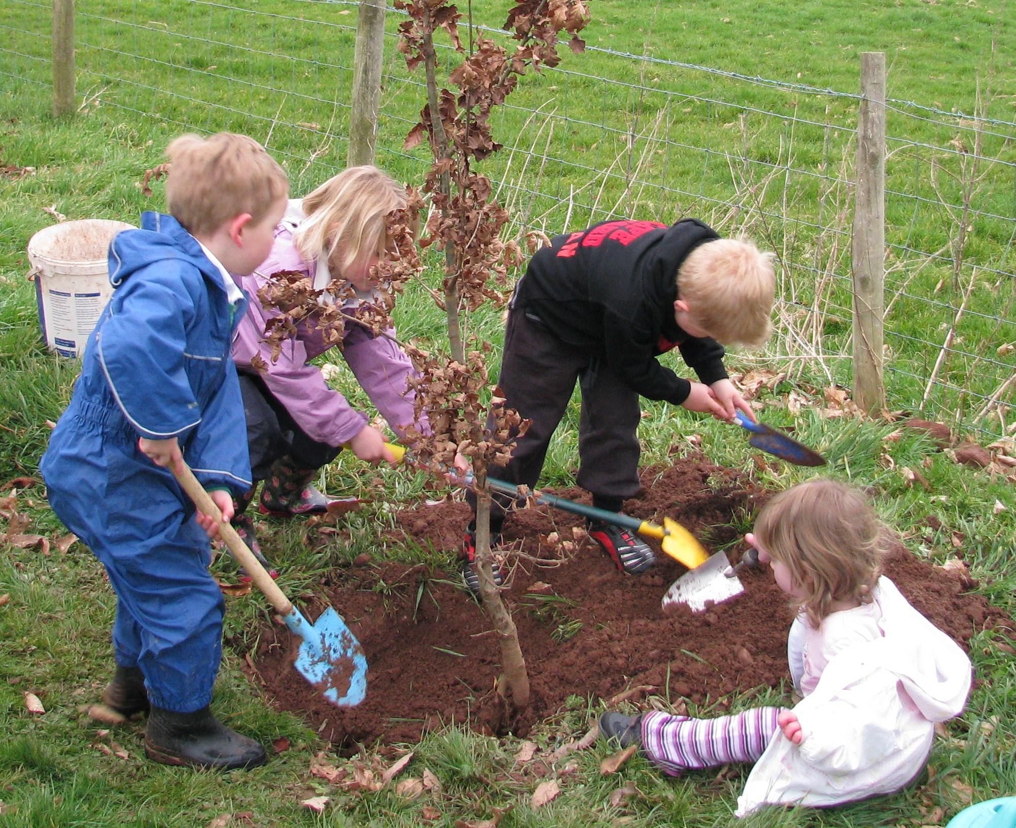 Planting Jubilee Trees