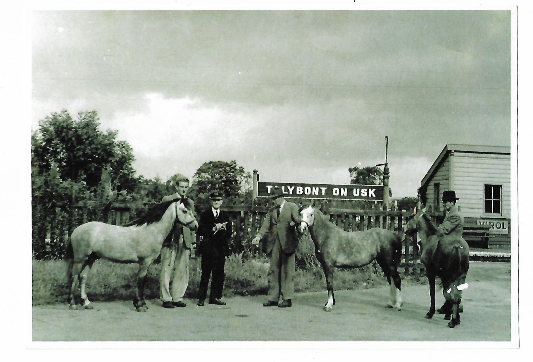 Criban ponies at the station for export abroad
