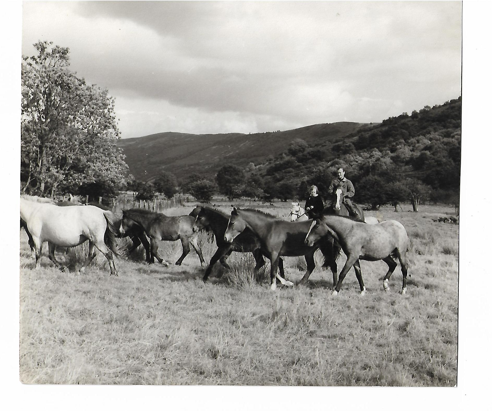 Criban ponies feature in the film Tiger Bay with John and Haley Mills 1959